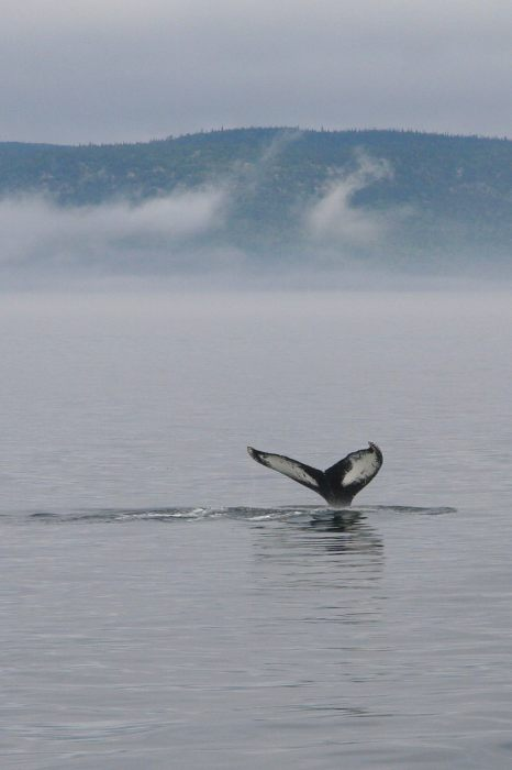 premiere-baleine